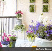 may17_hd_garden_containers