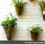may17_hd_garden_plantwall